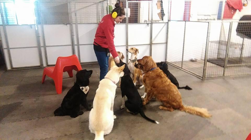 Training | The Dog Den
